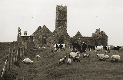 How to get the most out of a guidebook: Rosserrilly Friary