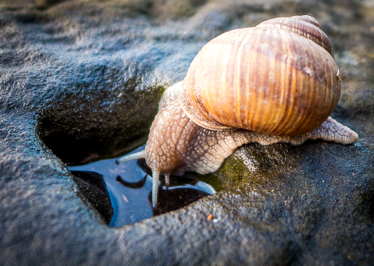 Snail drinking water: a discovery of a world in your own backyard