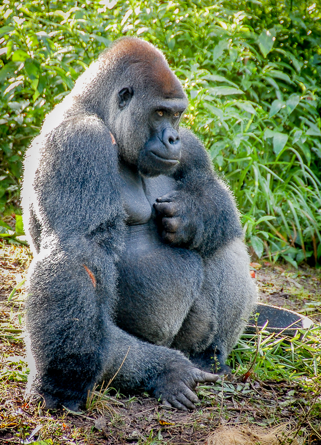 Why originality doesn't matter: Gorilla