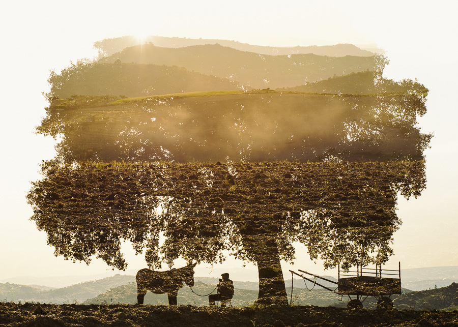 Collecting - Miranda Donkey Farmer Resting Under a Cork Tree by Christoffer Relander