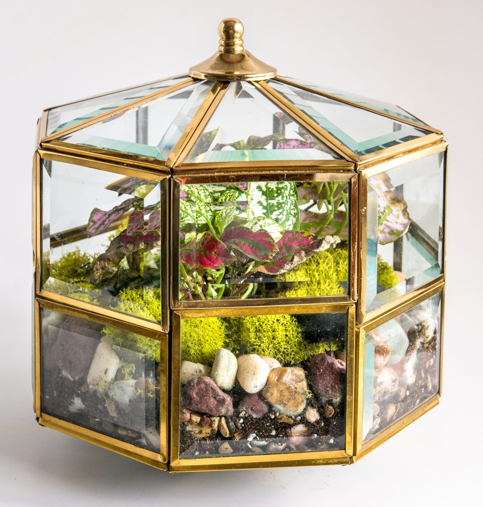 Travel and terrariums - light fixture terrarium