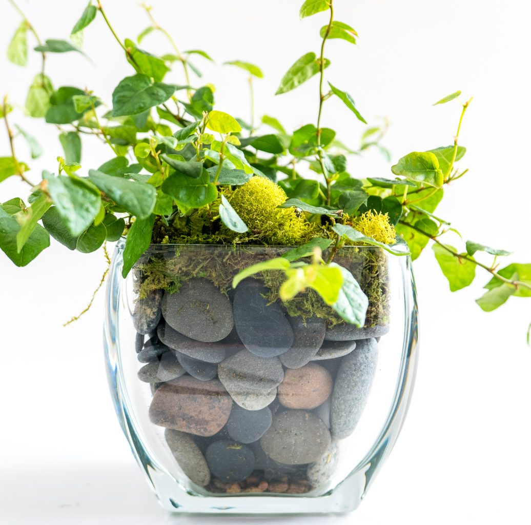 Travel and terrariums - faux terrarium with stone and glass