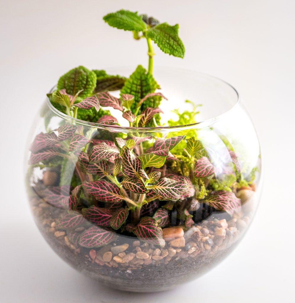 Travel and terrariums - fish bowl