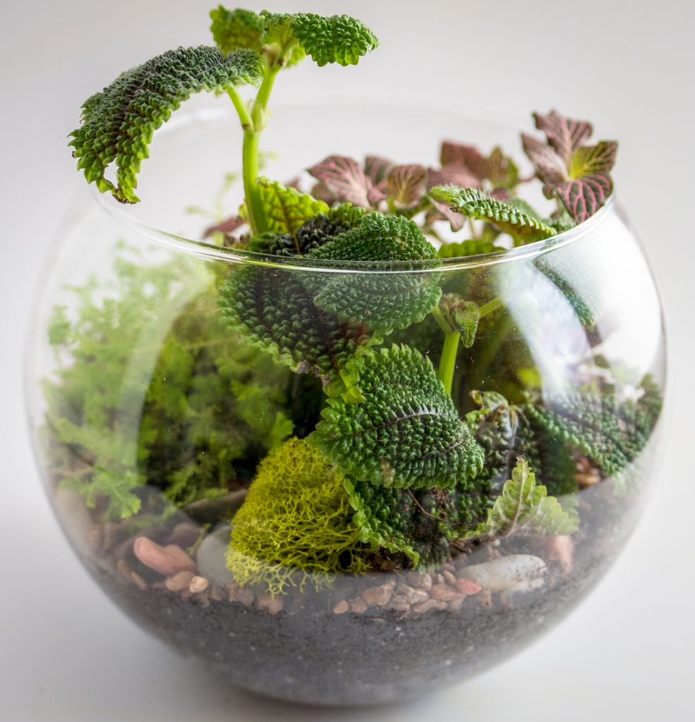 Travel and terrariums - textures of leaves